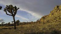Joshua Tree, Grounded, A Daily Affirmation, www.adailyaffirmation.com