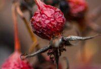 Last Years Berries, Gratitude, A Daily Affirmation, www.adailyaffirmation.com